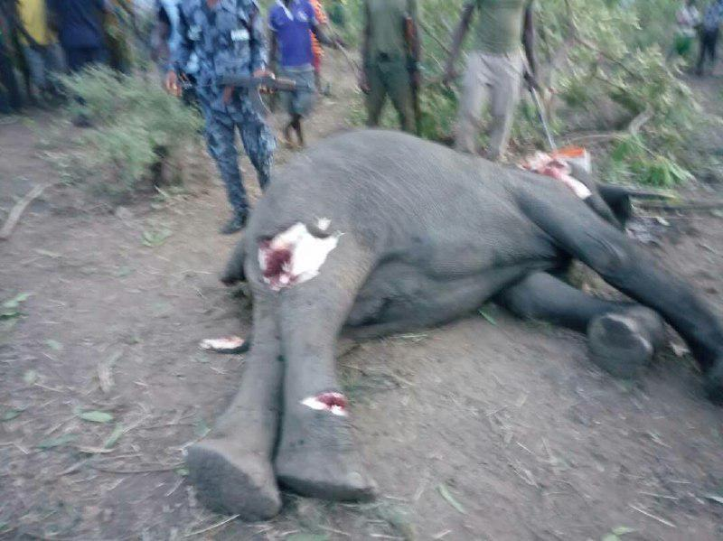 Ghana: 2 Mole park elephants killed by Larabanga youth