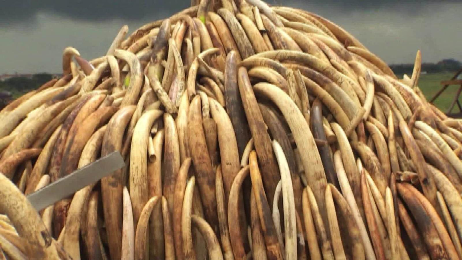 New British law bans ivory sales