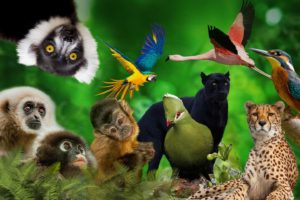 #South Africa: SAASA takes firm stance on captive wildlife welfare