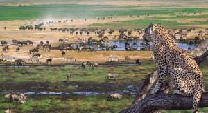 Tanzania Ranked 10th On the List of Growing Tourism Markets