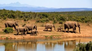 African Tourism is the 2nd fastest growing region – WTTC Report