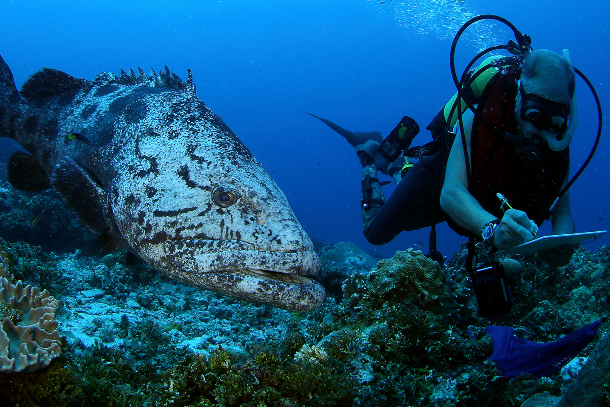 Seychelles Designates 30% of its EEZ as Marine Protected Area
